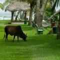 Coconut Lagoon – CGH Earth